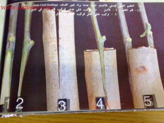 عملية تطعيم النبات زراعية تطعيم